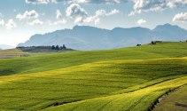 Sẽ xây dựng Nghị quyết về miễn thuế sử dụng đất nông nghiệp