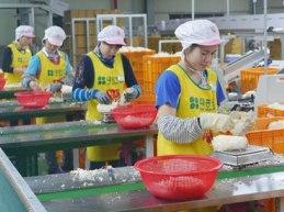 Tiếp tục thí điểm thực hiện đưa NLĐ đi làm việc thời vụ tại Hàn Quốc