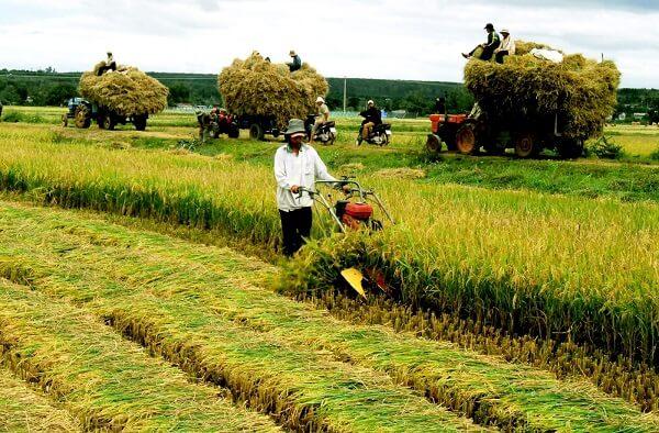 hỗ trợ tín dụng phát triển nông thôn