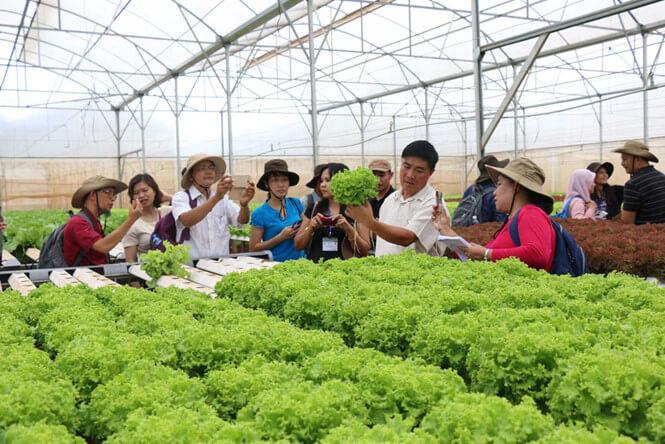 liên kết sản xuất nông nghiệp
