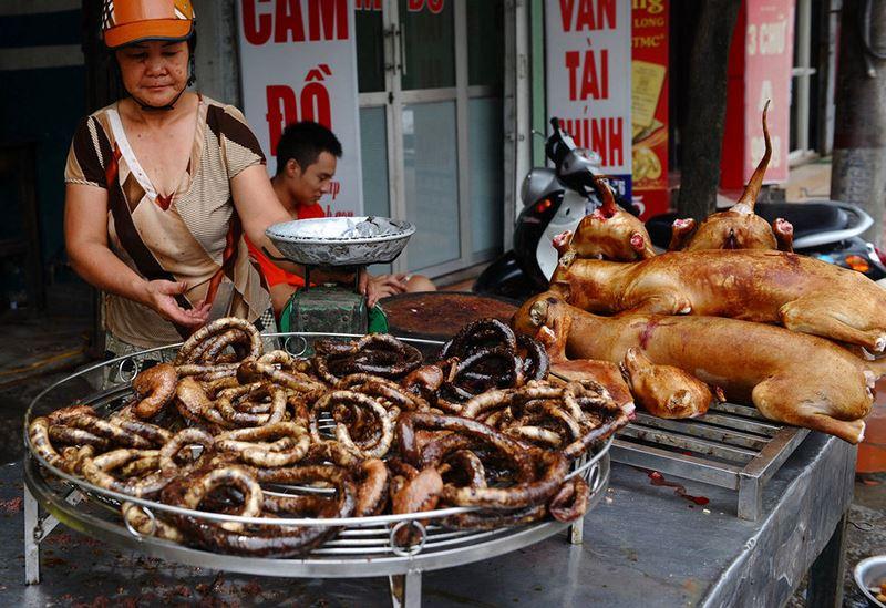 cấm ăn thịt chó